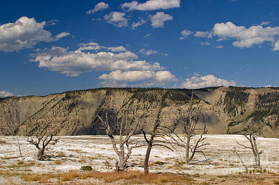 Poster featuring the photograph Mammoth Springs Sentinels by Charles Kozierok