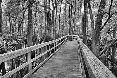 Manatee Springs Black And White Boardwalk Poster