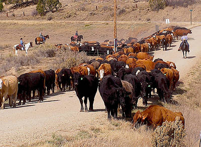 Mancos Valley Cattle Drive Poster by FeVa  Fotos