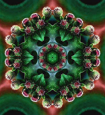 Mandala Bull Thistle Poster by Nancy Griswold