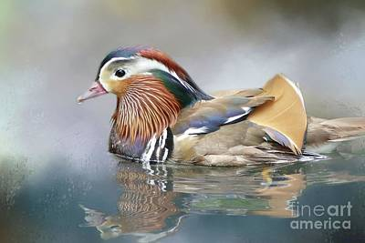 Mandarin Duck Swimming Poster
