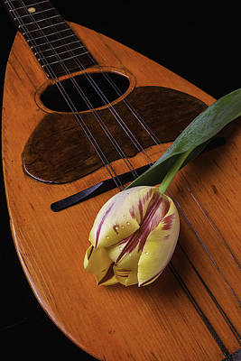 Mandolin And Tulip Poster by Garry Gay