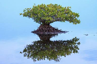 Mangrove Reflection Poster