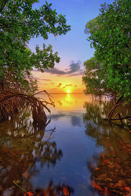Mangrove Sunset From Jensen Beach Florida Poster by Justin Kelefas