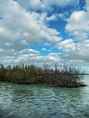 Poster featuring the photograph Mangroves In Key West Damaged By The Storm by Bob Slitzan