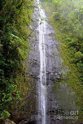 Manoa Falls - Honolulu Hawaii Poster by Mary Deal