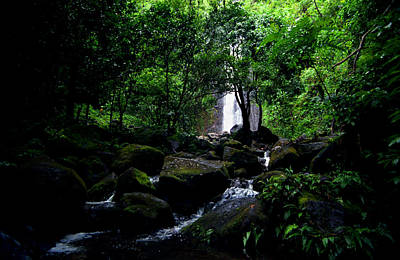 Manoa Falls Stream Poster by Kevin Smith