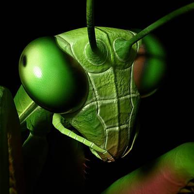 Mantis Head Poster