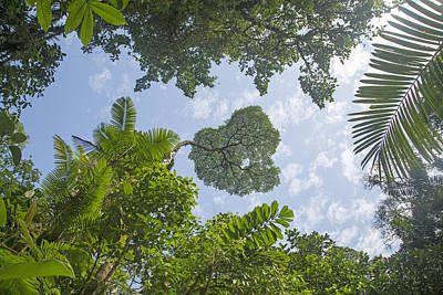 Manuel Antonio Jungle Poster