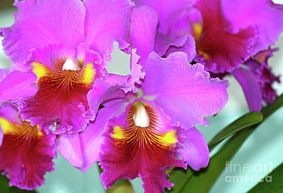 Many Purple Orchids Poster