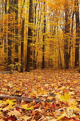 Maple Forest In Autumn Poster