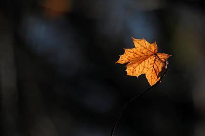 Maple Leaf Setauket New York Poster