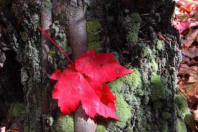 Maple Leaf Still Life Poster