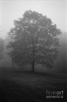 Maple Tree In Fog Poster by Lowell Anderson
