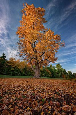 Maple Tree In Vaughan Woods Poster by Rick Berk