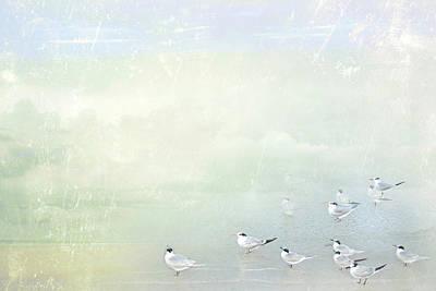 Marco Morning Poster by Karen Lynch