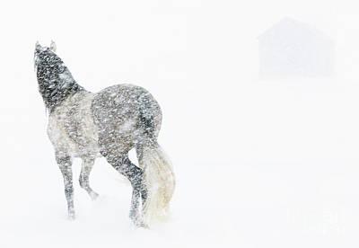 Mare In A Blizzard II Poster by Carol Walker