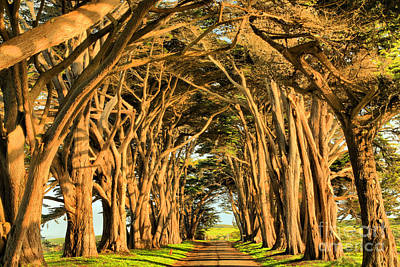 Marin County Tunnel Of Cypress Poster by Adam Jewell