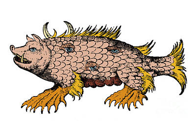 Marine Sow, Sea Monster, 16th Century Poster by Science Source