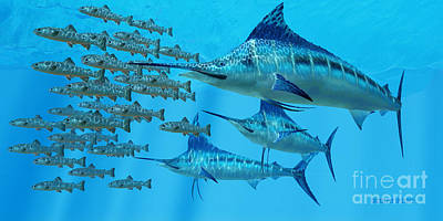 Marlin After A Fish School Poster by Corey Ford
