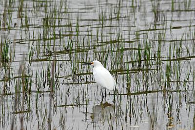 Marsh Bird 1 Poster