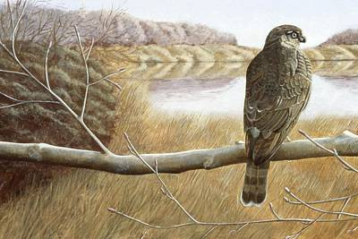 Poster featuring the painting Marsh Hawk by Laurie Stewart