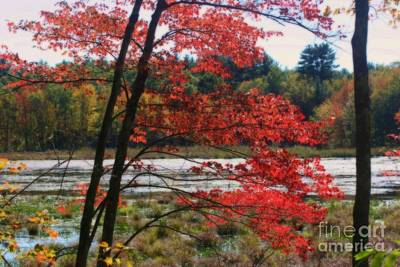 Poster featuring the photograph Marsh In Autumn by Smilin Eyes  Treasures