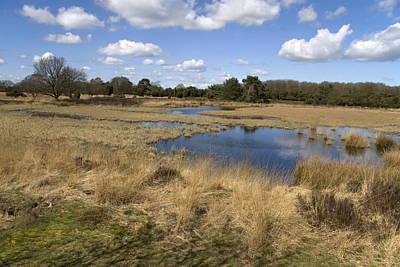 marsh in nature area Dwingelderveld, Netherlands Poster
