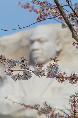 Martin Luther King Memorial And Cherry Blossoms I Poster by Clarence Holmes