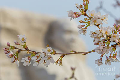 Martin Luther King Memorial And Cherry Blossoms II Poster by Clarence Holmes