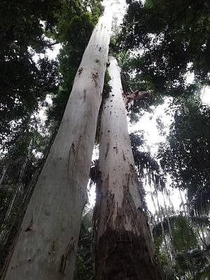 Mary Cairncross Rainforest  Poster