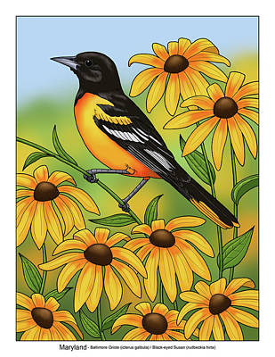 Maryland State Bird Oriole And Daisy Flower Poster