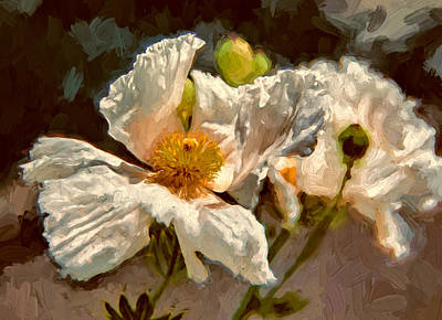 Matilija Poppies Poster by John K Woodruff