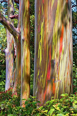 Maui Eucalyptus Poster by Kelley King