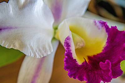 Maui Orchid Poster by Alana Thrower