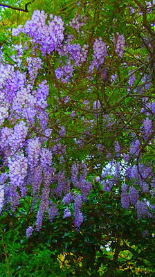 Poster featuring the photograph May Wisteria At Duke Gardens by Angela Annas