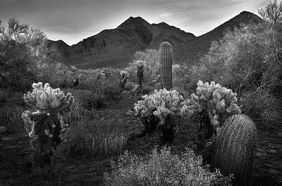 Poster featuring the photograph Mcdowell Mountains Black And White by Dave Dilli