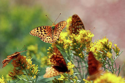 Meagher County Butterflies Poster