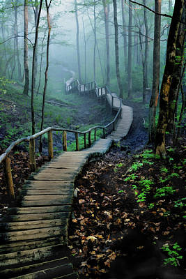 Meandering Through Foggy Woods Poster by Elaine Plesser
