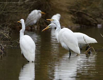 Meeting Of The Egrets Poster