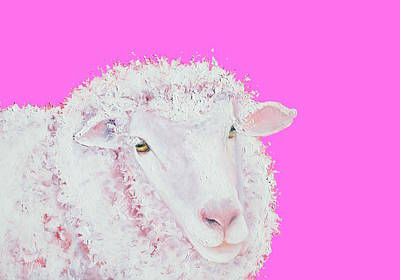 Merino Sheep On Hot Pink Poster by Jan Matson