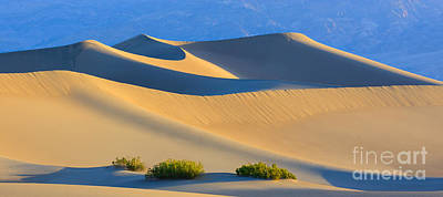 Mesquite Flat Sand Dunes In Death Valley National Park Poster