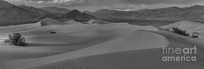 Mesquite Sand Dunes Black And White Panorama Poster