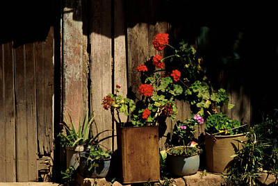 Mexican Geraniums Poster by Jerry McElroy