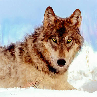 Mexican Wolf Painting Poster by Bob and Nadine Johnston