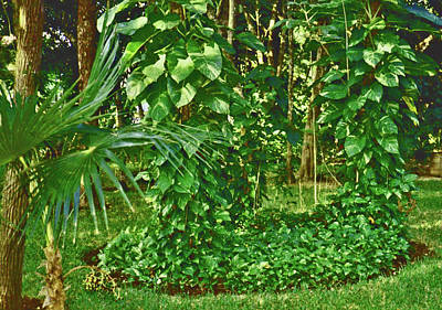 Poster featuring the photograph Mexico Greenery by Tammy Sutherland