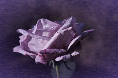 Poster featuring the photograph Mid September Purple Rose by Richard Cummings