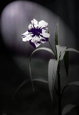 Midnight Bloom Poster by Gwen Vann-Horn