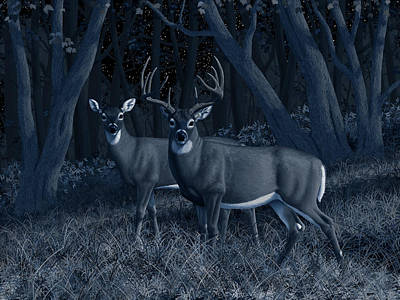 Midnight Stroll - Whitetail Deer At Night Poster