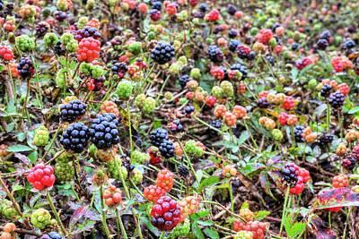 Miles Of Blackberries Poster